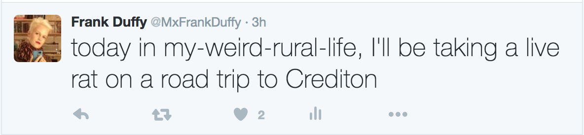 Screengrab of tweet: today in my-weird-rural-life, I'll be taking a live rat on a road trip to Crediton