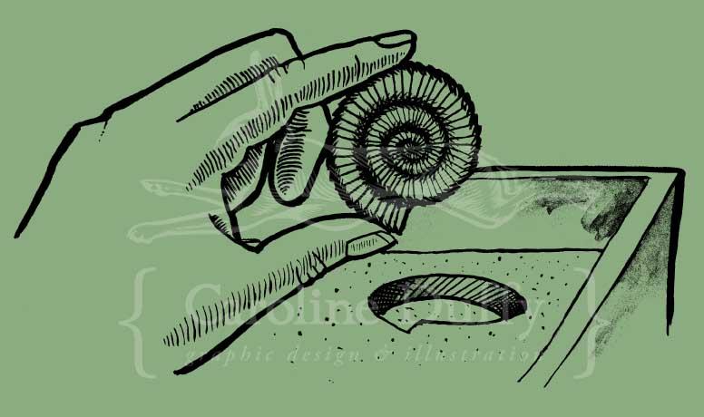 hand holding ammonite