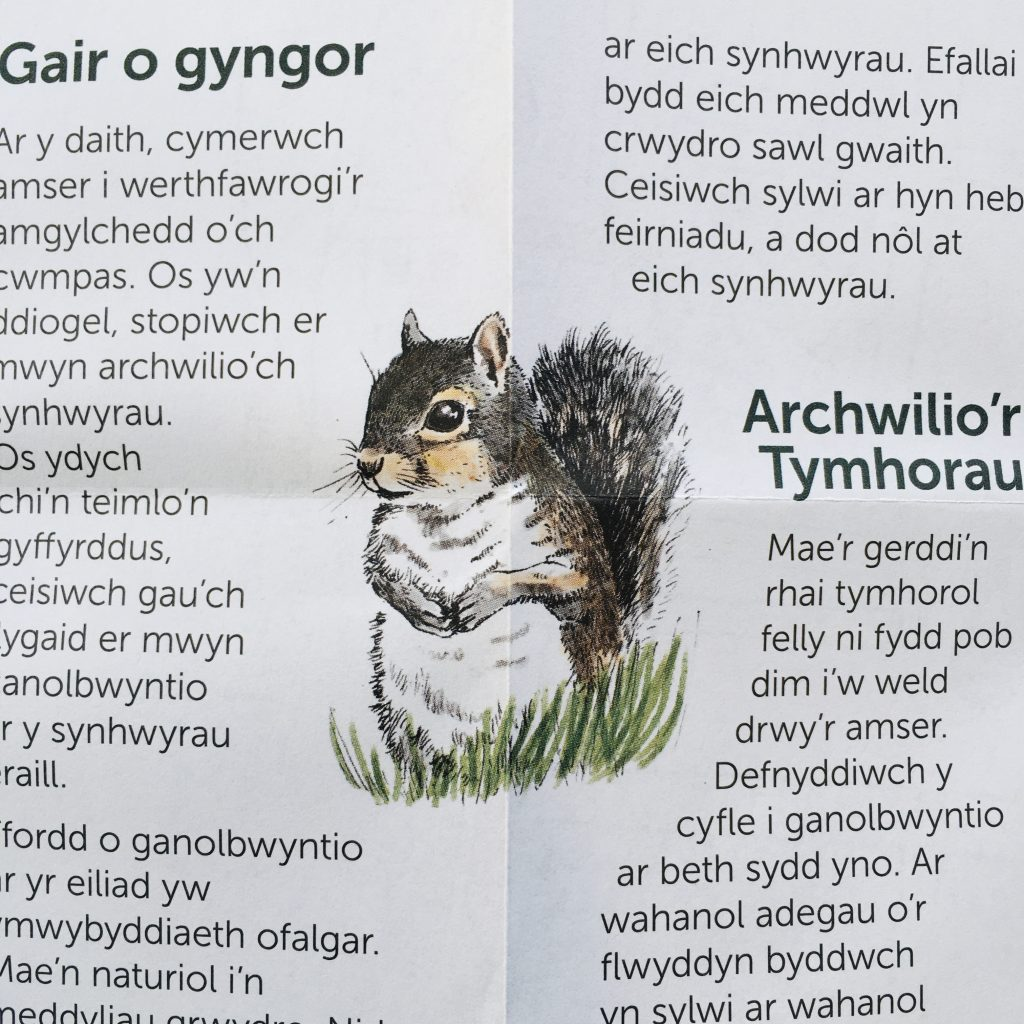 close up of grey squirrel - one of the many wildlife illustrations on the illustrated map